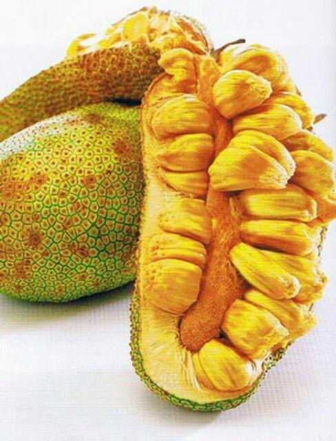 Cempedak, Buah Eksotis Yang Tidak Kalah Dari Durian