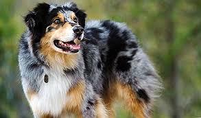Fakta Unik Tentang Sifat Anjing Peliharaan